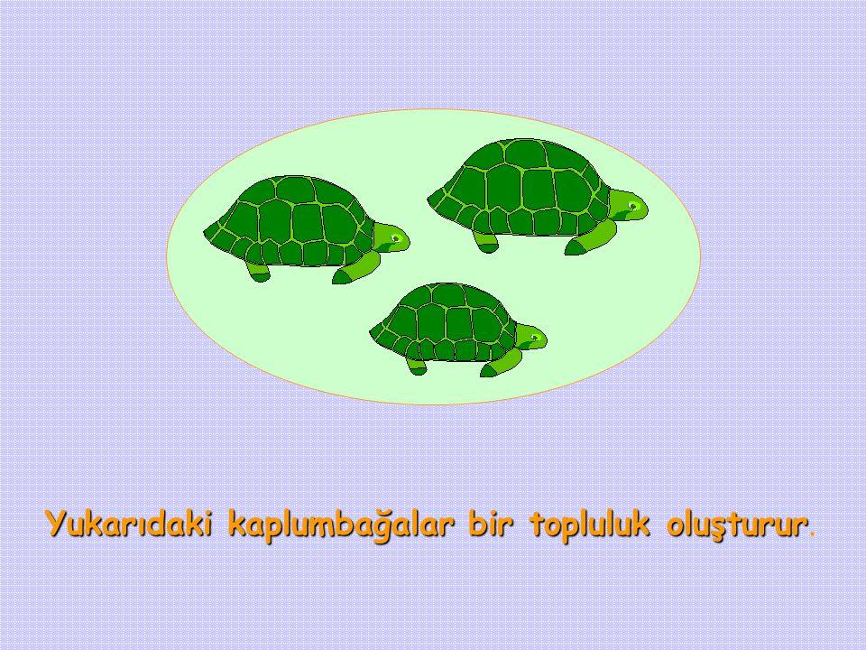 Yukarıdaki kaplumbağalar bir topluluk oluşturur Yukarıdaki kaplumbağalar bir topluluk oluşturur.