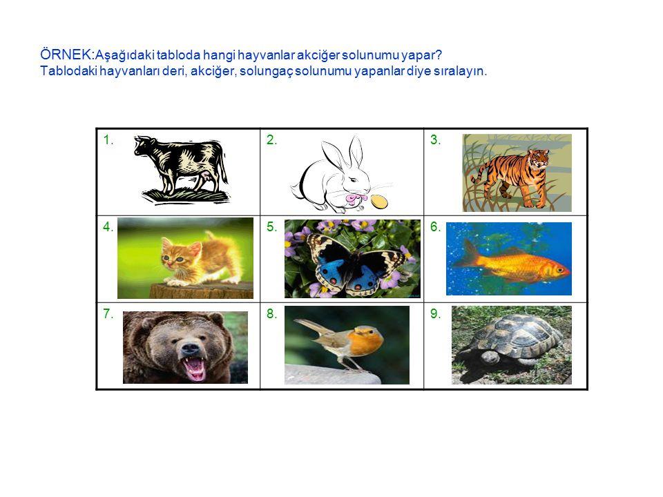 ÖRNEK: Aşağıdaki tabloda hangi hayvanlar akciğer solunumu yapar.