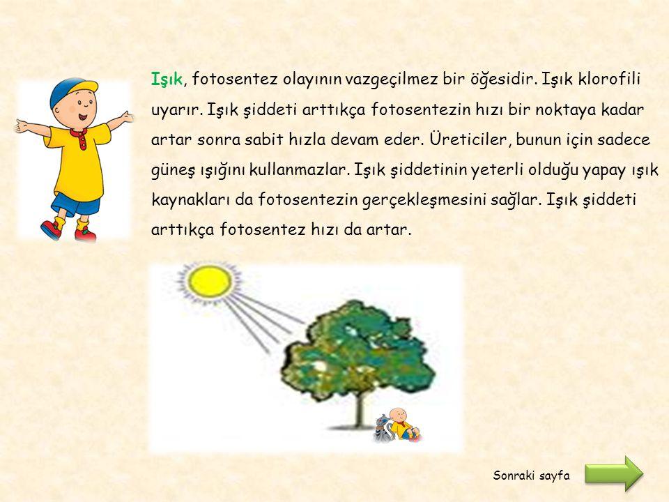 Fotosenteze ışığın etkisi nedir? Sadece güneş ışığında mı gerçekleşir? Etkinliğe devam etmeye ne dersiniz ? Etkinlik 1 : Işığın fotosentez hızına etki