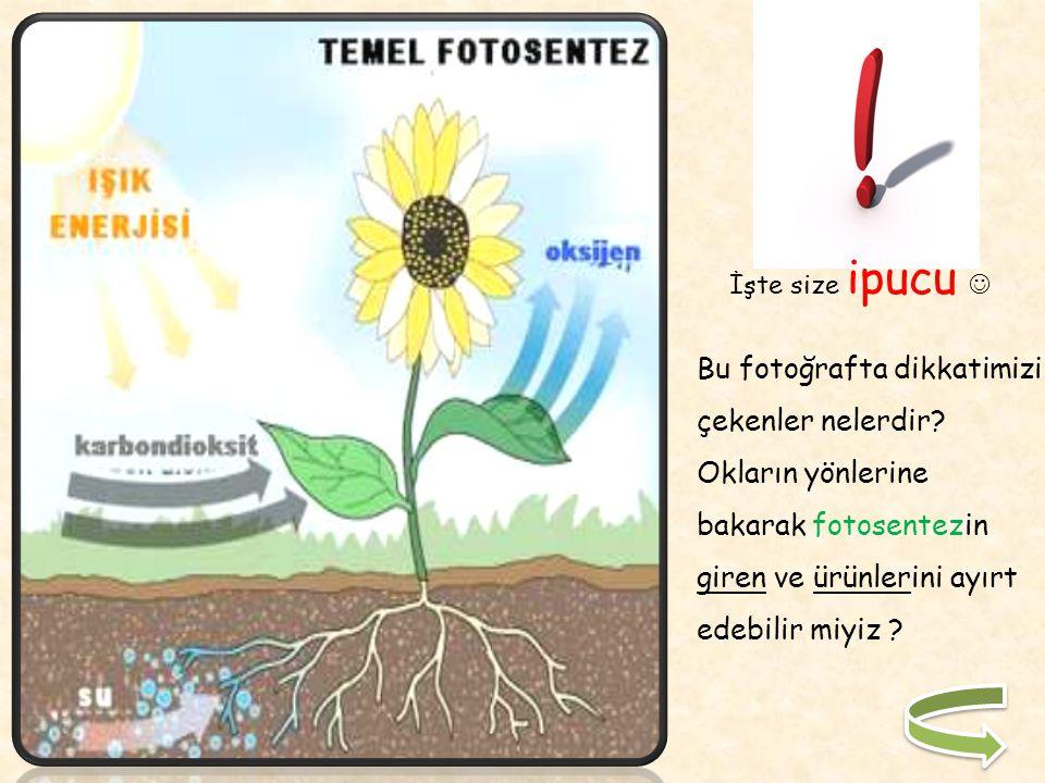 Karbon kullanıldıktan sonra ortaya çıkan oksijen ise havaya bırakılır. Bitki daha sonra besine ihtiyaç duyduğunda bu karbonhidratlara depo edilen ener