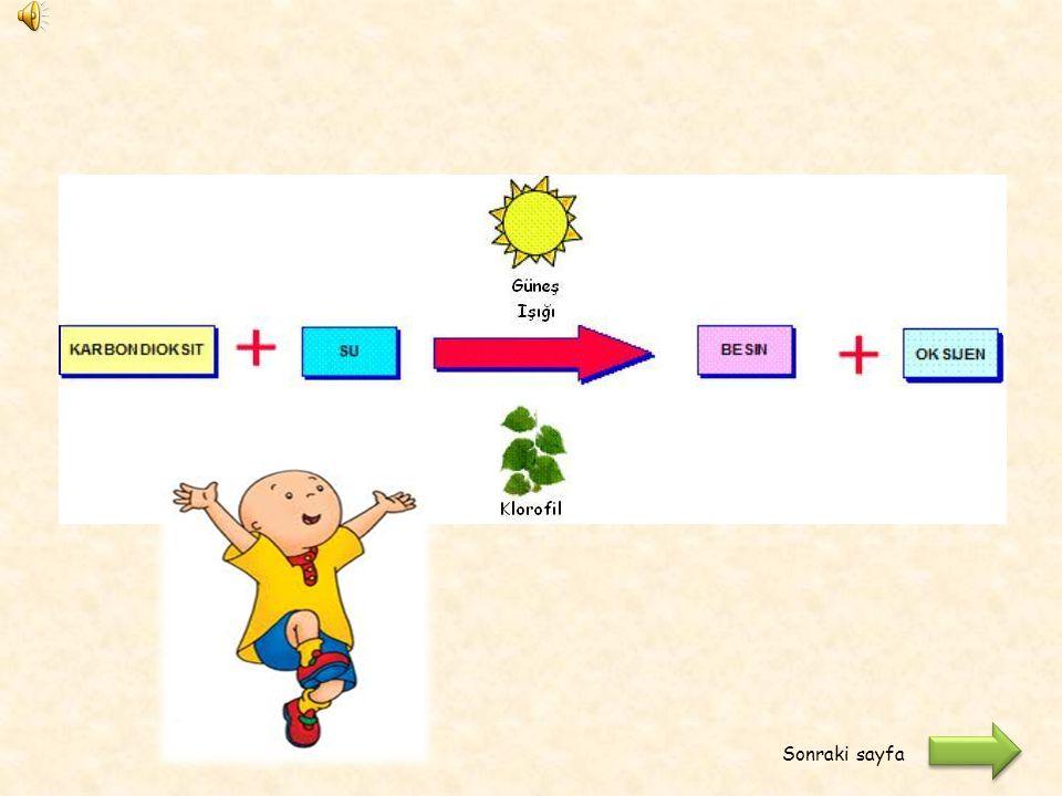 Denklemi tamamladıktan sonra aşağıdaki butona tıklayarak cevaplarınızı kontrol edebilirsiniz. Gözlemlerinize göre aşağıdaki denklemi defterinizde tama
