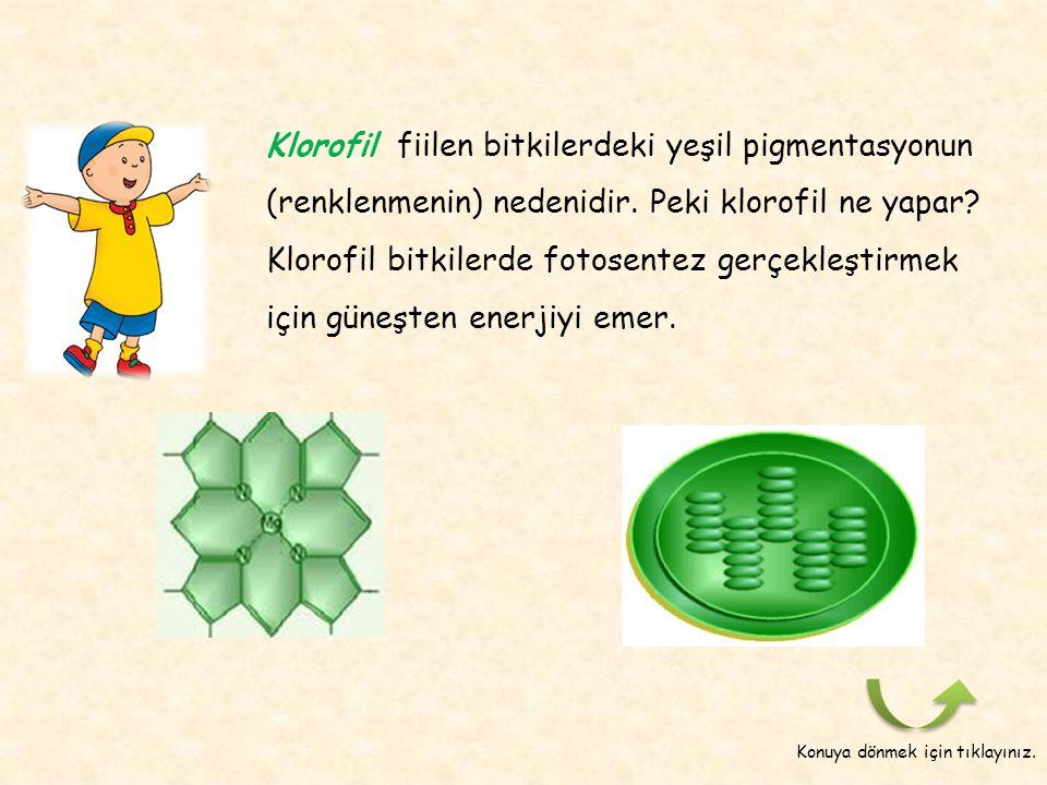 Klorofil, fotosentez için neden gereklidir? Hadi bunu bir etkinlik ile gözlemleyelim. Etkinlik : Fotosentez ve Özellikleri Bölüm 6Fotosentez ve Özelli