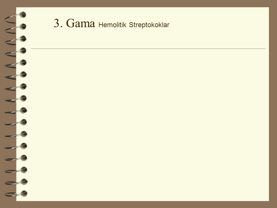 2. Beta Hemolitik Streptokoklar-