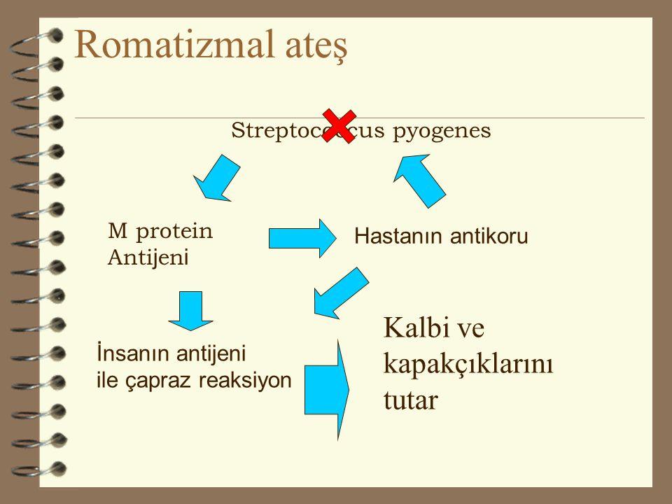 GEÇ KOMPLİKASYONLAR: Geç veya nonsüpüratif komplikasyonlar ARF ve AGN dir.