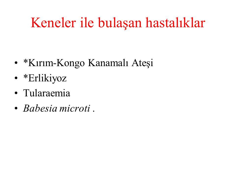 Keneler ile bulaşan hastalıklar *Kırım-Kongo Kanamalı Ateşi *Erlikiyoz Tularaemia Babesia microti.