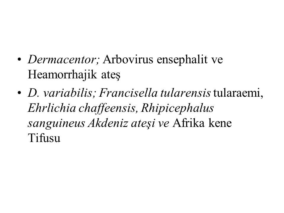 Dermacentor; Arbovirus ensephalit ve Heamorrhajik ateş D. variabilis; Francisella tularensis tularaemi, Ehrlichia chaffeensis, Rhipicephalus sanguineu