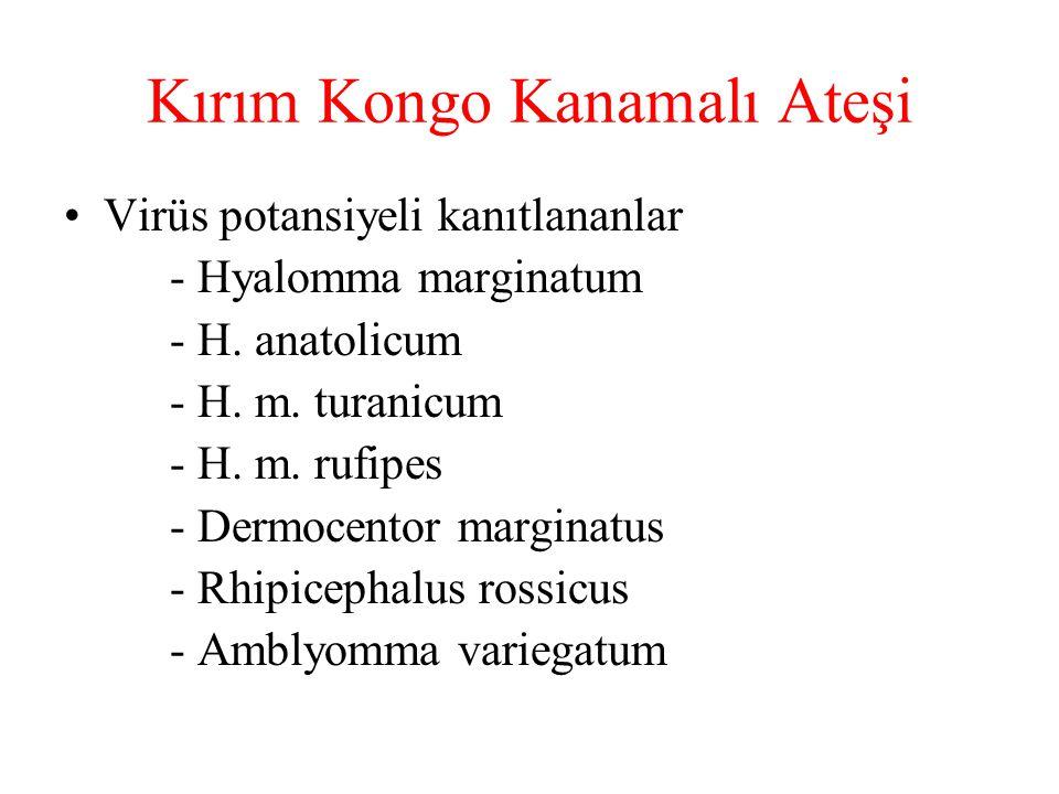 Kırım Kongo Kanamalı Ateşi Virüs potansiyeli kanıtlananlar - Hyalomma marginatum - H. anatolicum - H. m. turanicum - H. m. rufipes - Dermocentor margi