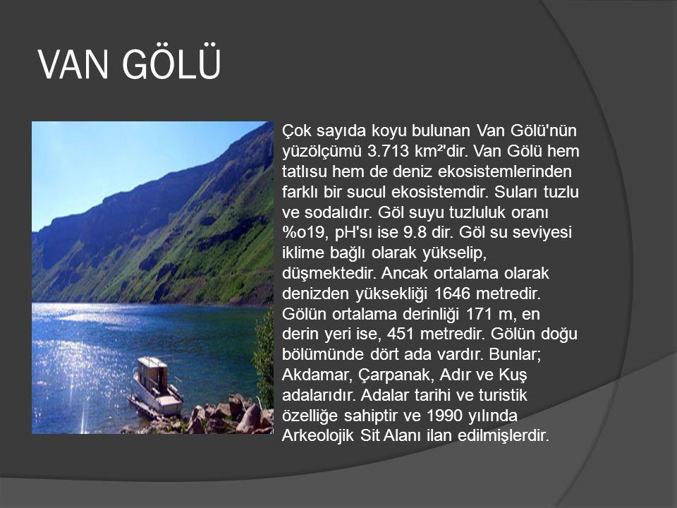 VAN GÖLÜ Çok sayıda koyu bulunan Van Gölü'nün yüzölçümü 3.713 km²'dir. Van Gölü hem tatlısu hem de deniz ekosistemlerinden farklı bir sucul ekosistemd