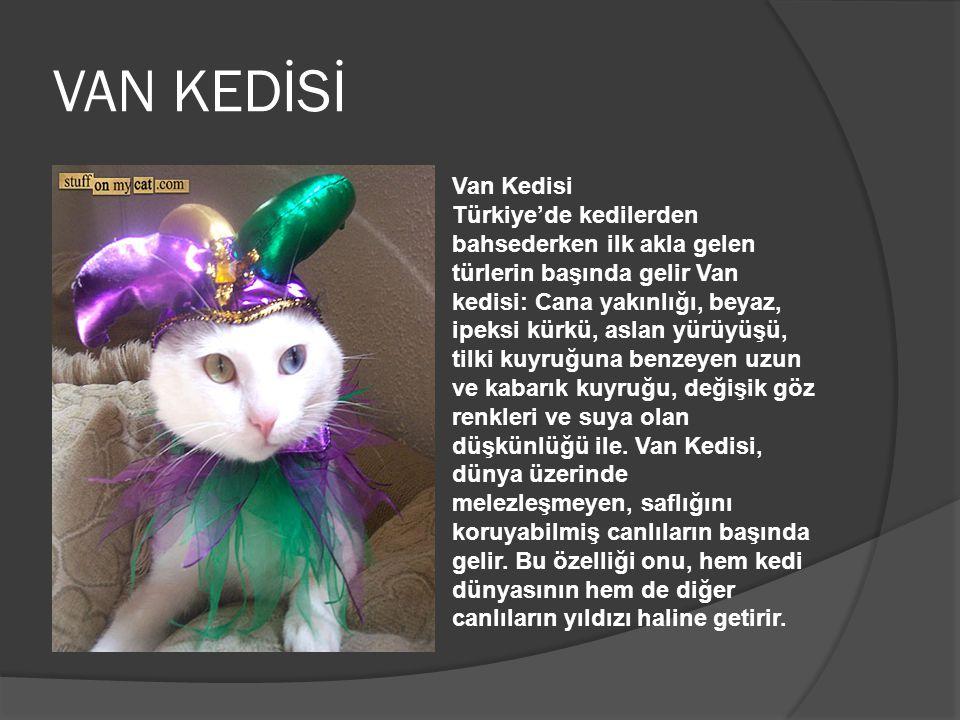 VAN KEDİSİ Van Kedisi Türkiye'de kedilerden bahsederken ilk akla gelen türlerin başında gelir Van kedisi: Cana yakınlığı, beyaz, ipeksi kürkü, aslan y