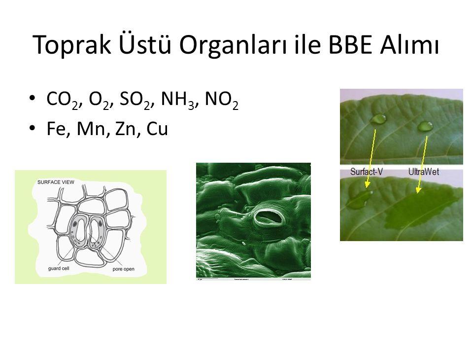 Toprak Üstü Organları ile BBE Alımı CO 2, O 2, SO 2, NH 3, NO 2 Fe, Mn, Zn, Cu