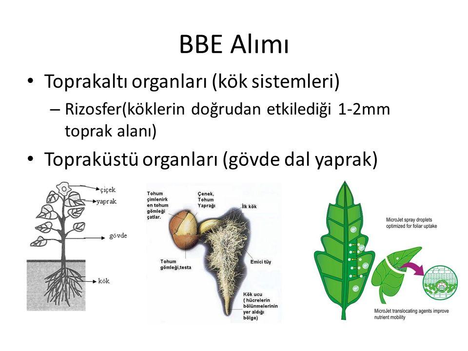 BBE Alımı Toprakaltı organları (kök sistemleri) – Rizosfer(köklerin doğrudan etkilediği 1-2mm toprak alanı) Topraküstü organları (gövde dal yaprak)