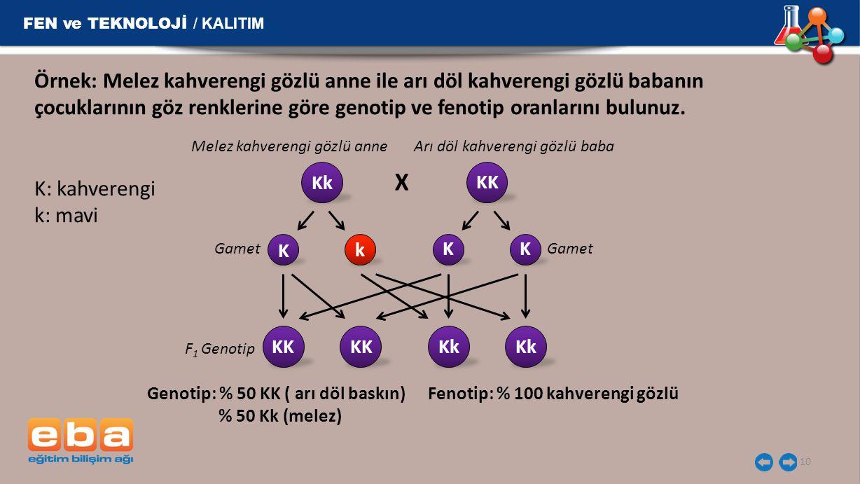 FEN ve TEKNOLOJİ / KALITIM 10 Örnek: Melez kahverengi gözlü anne ile arı döl kahverengi gözlü babanın çocuklarının göz renklerine göre genotip ve feno