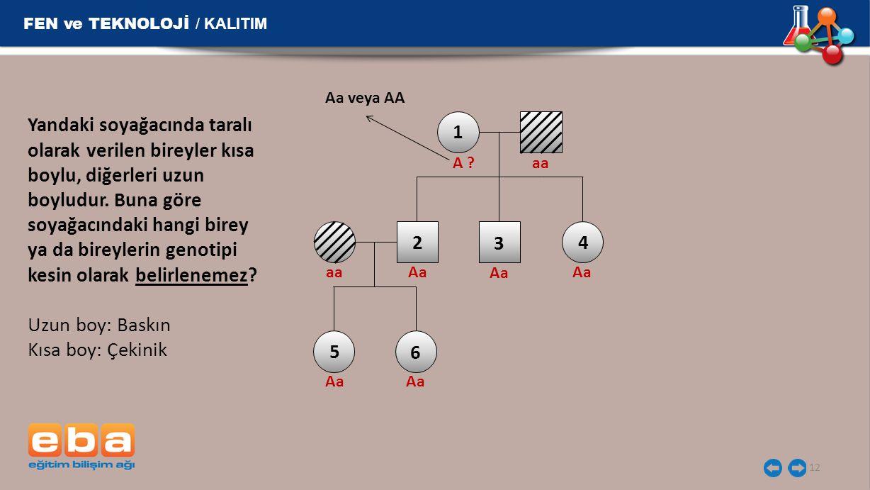 FEN ve TEKNOLOJİ / KALITIM 12 Yandaki soyağacında taralı olarak verilen bireyler kısa boylu, diğerleri uzun boyludur. Buna göre soyağacındaki hangi bi