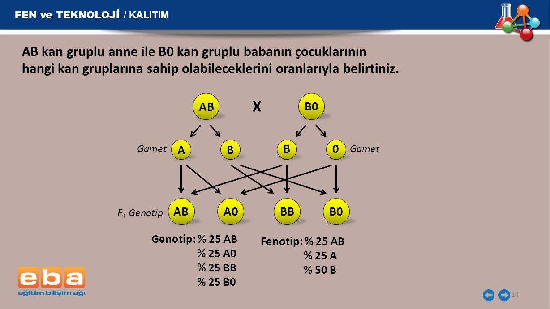 FEN ve TEKNOLOJİ / KALITIM 14 AB kan gruplu anne ile B0 kan gruplu babanın çocuklarının hangi kan gruplarına sahip olabileceklerini oranlarıyla belirt