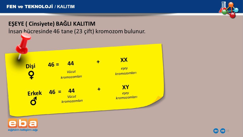 EŞEYE ( Cinsiyete) BAĞLI KALITIM İnsan hücresinde 46 tane (23 çift) kromozom bulunur. FEN ve TEKNOLOJİ / KALITIM 16 Dişi 46 = 44 + XX Vücut eşey kromo