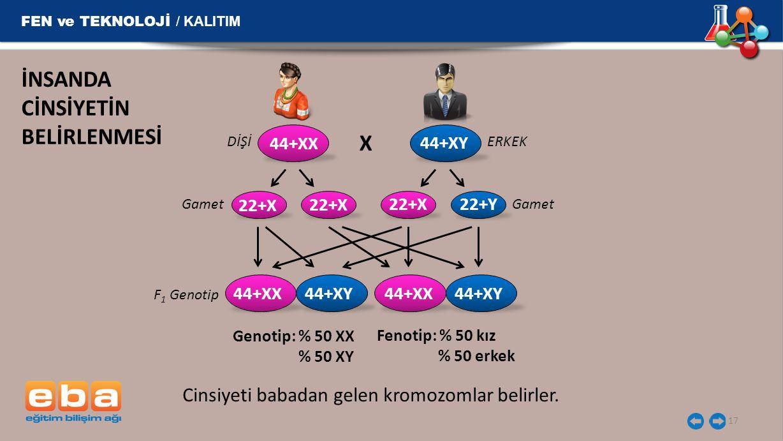 FEN ve TEKNOLOJİ / KALITIM 17 İNSANDA CİNSİYETİN BELİRLENMESİ DİŞİERKEK X Gamet F 1 Genotip Gamet Genotip: % 50 XX % 50 XY Fenotip: % 50 kız % 50 erke