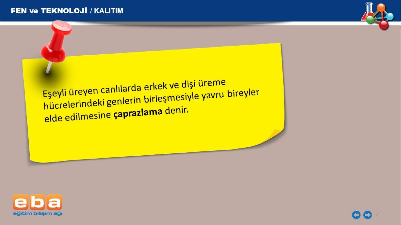 FEN ve TEKNOLOJİ / KALITIM 3 Çaprazlama yapılırken şu sıra takip edilir: 1.