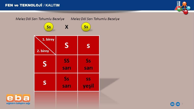 FEN ve TEKNOLOJİ / KALITIM 7 Ss Melez Döl Sarı Tohumlu Bezelye X 1. birey 2. birey Ss S s SS sarı Ss sarı Ss sarı ss yeşil