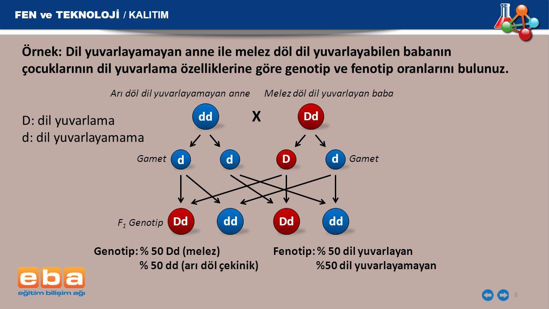 FEN ve TEKNOLOJİ / KALITIM 8 Örnek: Dil yuvarlayamayan anne ile melez döl dil yuvarlayabilen babanın çocuklarının dil yuvarlama özelliklerine göre gen