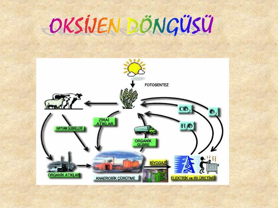 FOSFOR DÖNGÜSÜ Fosfor da, canlılar için gerekli temel maddelerdendir.Hücrelerde nükleik asitlerin enerji aktarımlarını sağlayan adenozin trifosfat (AT