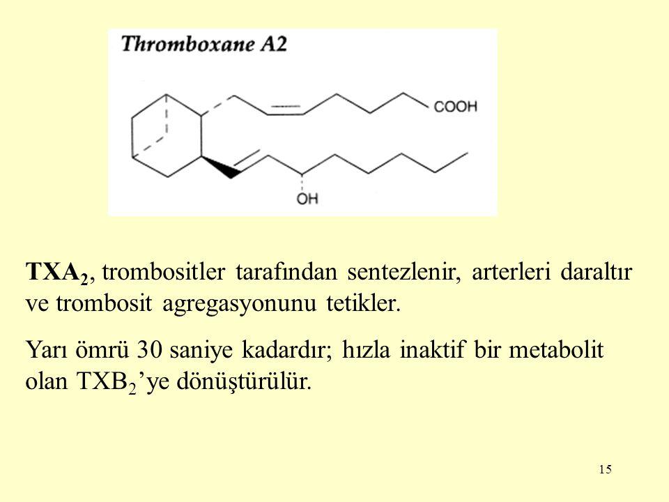 15 TXA 2, trombositler tarafından sentezlenir, arterleri daraltır ve trombosit agregasyonunu tetikler.