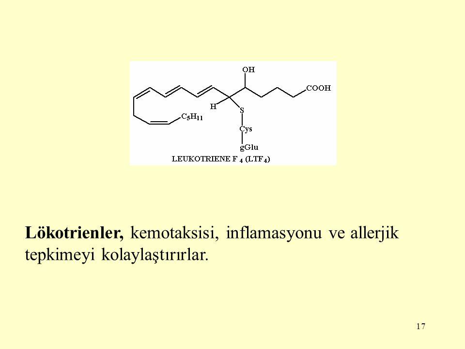 17 Lökotrienler, kemotaksisi, inflamasyonu ve allerjik tepkimeyi kolaylaştırırlar.