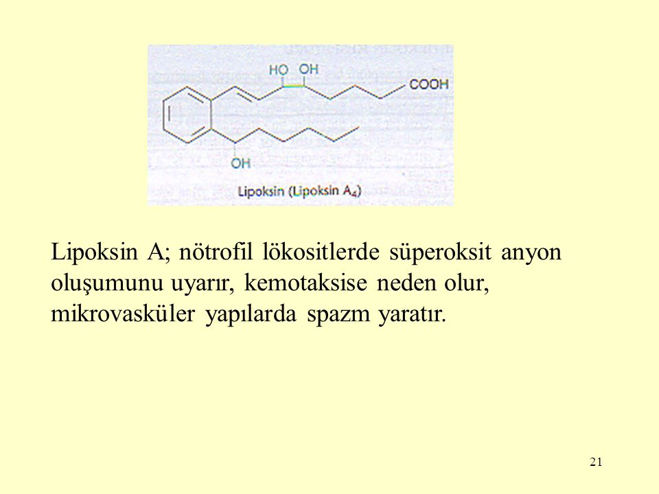 21 Lipoksin A; nötrofil lökositlerde süperoksit anyon oluşumunu uyarır, kemotaksise neden olur, mikrovasküler yapılarda spazm yaratır.
