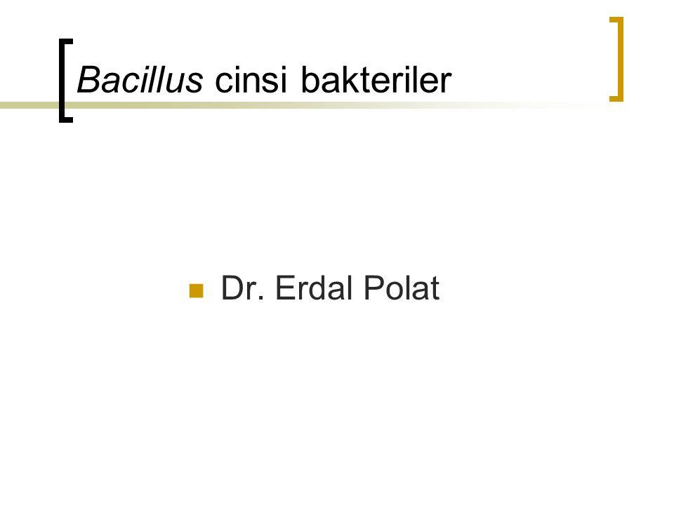 Bacillus cinsi bakteriler Dr. Erdal Polat