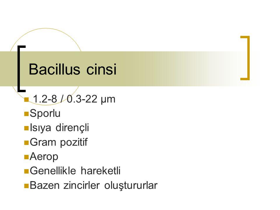 Bacillus cereus Bacillus anthracis Arasındaki farklar Hareketli Kapsülsüz Pencillin (10µ/ml) Ürer Kanlı agarda hemoliz yapar Gama fajlara duyarlı Turnusollu sütü 72 h peptonlaştırır Farelerde enfeksiyon oluşturmaz Hareketsiz Kapsülü Pencillin (10µ/ml) Üremez Kanlı agarda hemoliz yapmaz Gama fajlara duyarsız Turnusollu sütü 72 h peptonlaştırmaz Farelerde enfeksiyon oluşturur