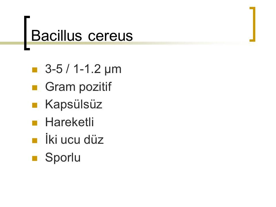 Bacillus cereus 3-5 / 1-1.2 µm Gram pozitif Kapsülsüz Hareketli İki ucu düz Sporlu