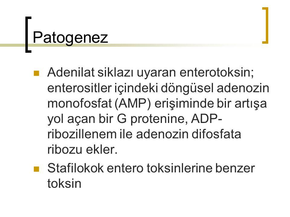 Patogenez Adenilat siklazı uyaran enterotoksin; enterositler içindeki döngüsel adenozin monofosfat (AMP) erişiminde bir artışa yol açan bir G protenin