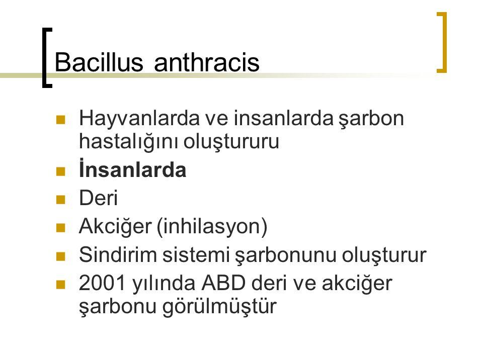 Bacillus anthracis Hayvanlarda ve insanlarda şarbon hastalığını oluştururu İnsanlarda Deri Akciğer (inhilasyon) Sindirim sistemi şarbonunu oluşturur 2