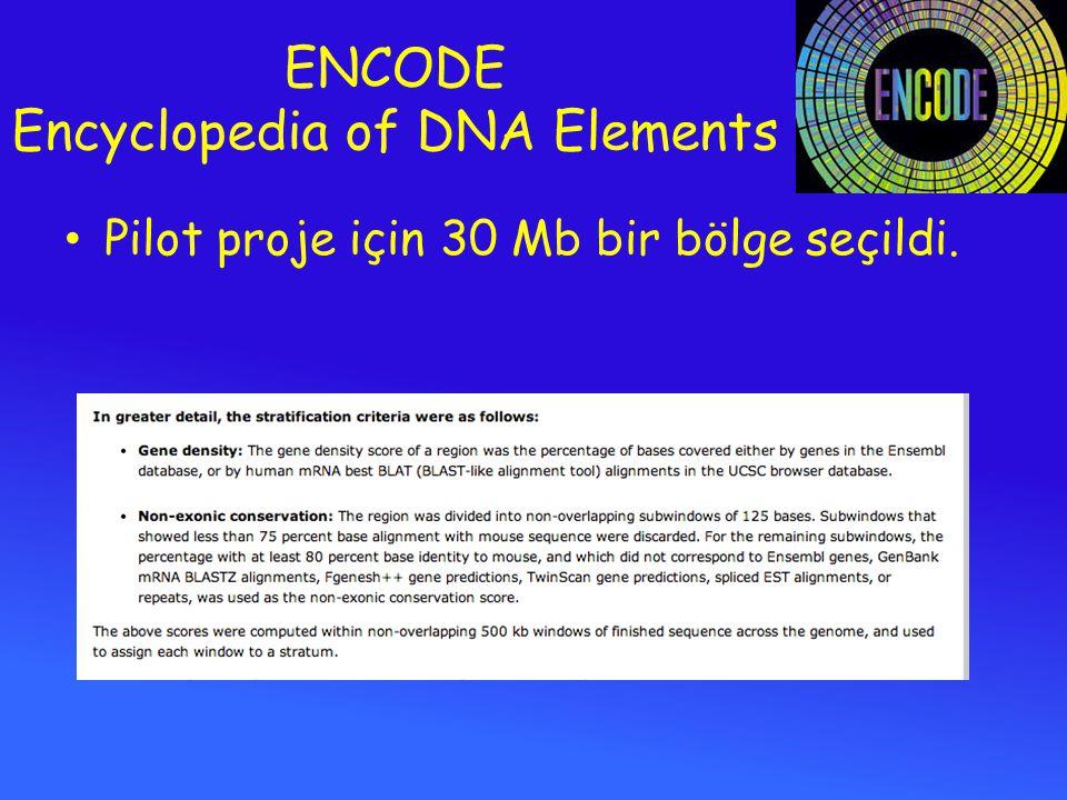 ENCODE Encyclopedia of DNA Elements Pilot proje için 30 Mb bir bölge seçildi.