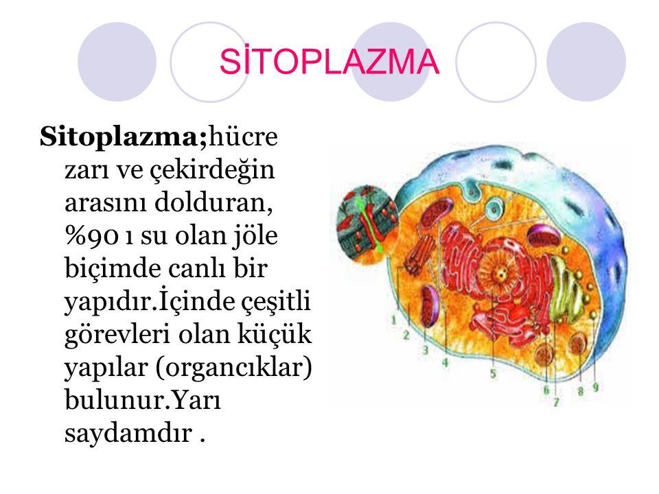 SİTOPLAZMA Sitoplazma;hücre zarı ve çekirdeğin arasını dolduran, %90 ı su olan jöle biçimde canlı bir yapıdır.İçinde çeşitli görevleri olan küçük yapı