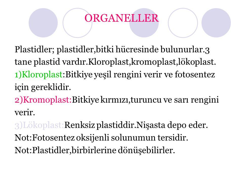 ORGANELLER Plastidler; plastidler,bitki hücresinde bulunurlar.3 tane plastid vardır.Kloroplast,kromoplast,lökoplast.
