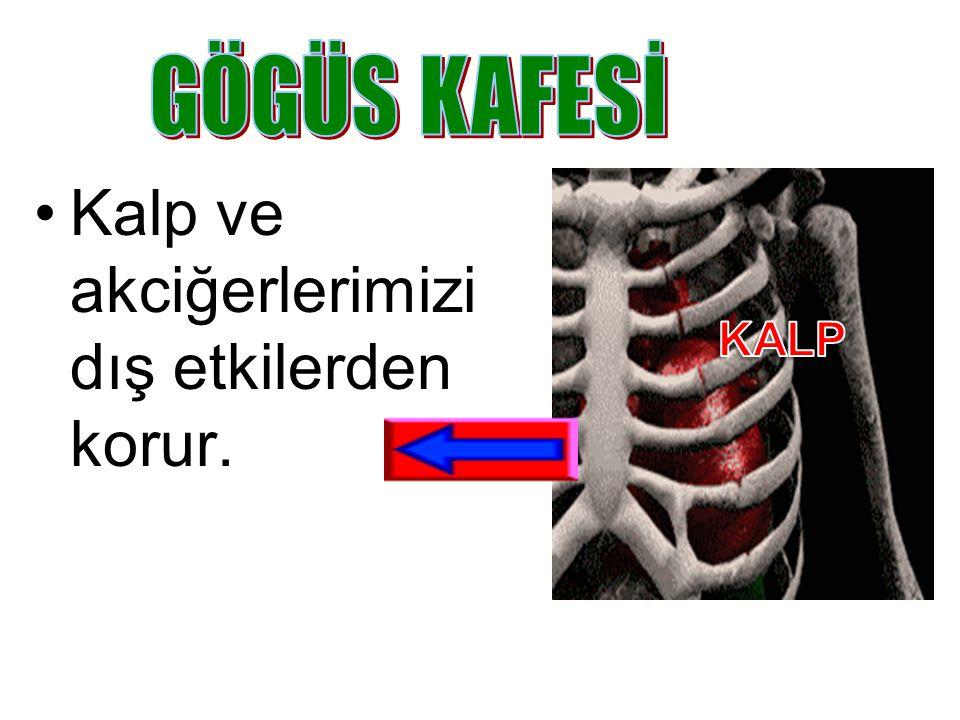 Beynimizi dış etkilerden korur. Kafatasındaki 22 kemikten 14 tanesi yüzümüzde bulunur. Kafatasının ön, yan, alt ve arkadan görüntüleri