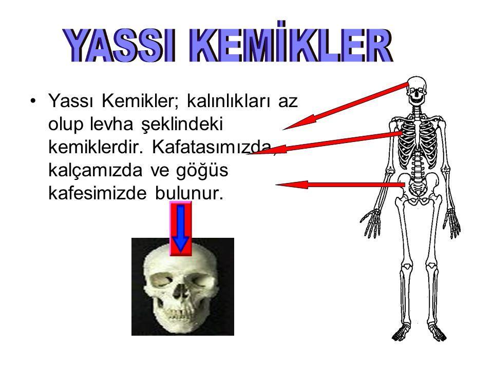Uzun Kemikler; boyları uzun olup silindire benzeyen kemiklerdir. Kollarımızda ve bacaklarımızda bulunur.