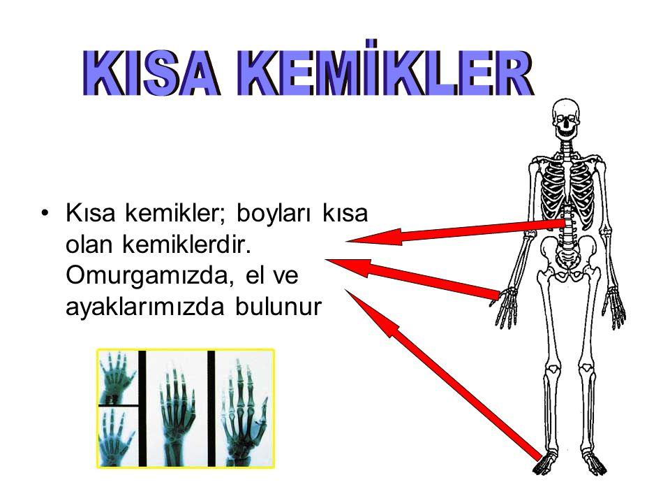 Yassı Kemikler; kalınlıkları az olup levha şeklindeki kemiklerdir. Kafatasımızda, kalçamızda ve göğüs kafesimizde bulunur.