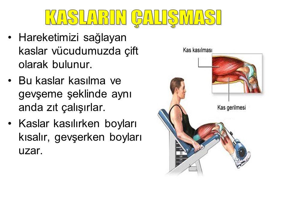 A.H. KAS ÇEŞİTLERİ