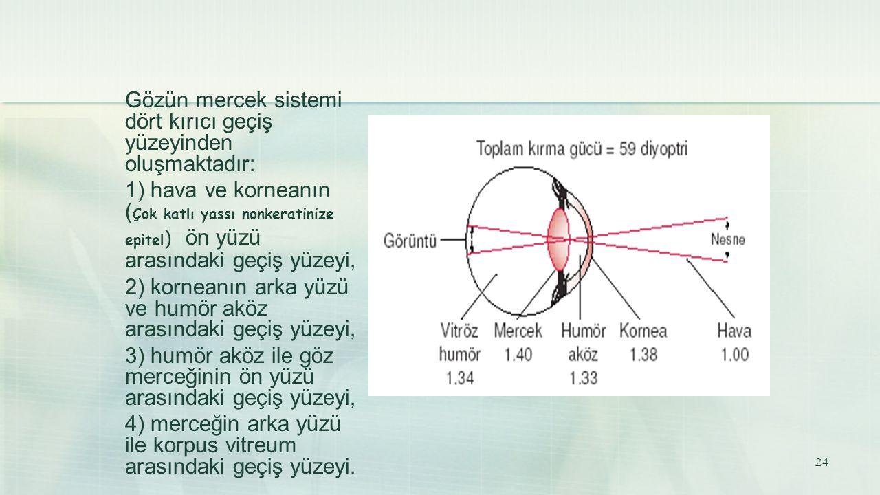Gözün mercek sistemi dört kırıcı geçiş yüzeyinden oluşmaktadır: 1) hava ve korneanın ( Çok katlı yassı nonkeratinize epitel ) ön yüzü arasındaki geçiş