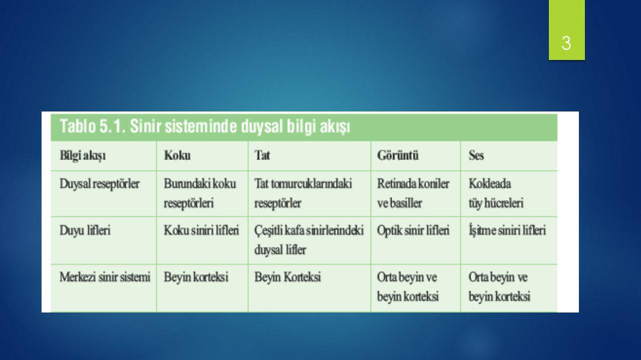 GÖRME KORTEKSİNİN ORGANİZASYONU VE İŞLEVİ Brodmann'ın 17.