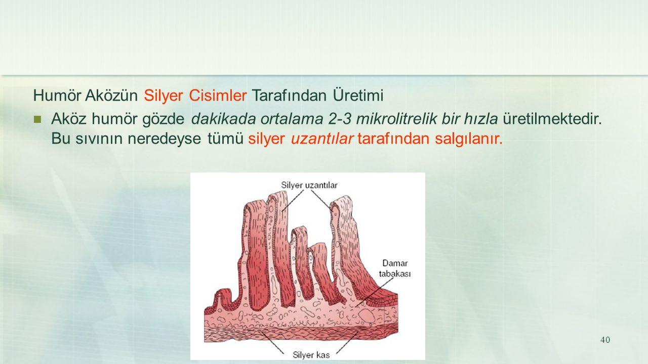 Humör Aközün Silyer Cisimler Tarafından Üretimi Aköz humör gözde dakikada ortalama 2-3 mikrolitrelik bir hızla üretilmektedir. Bu sıvının neredeyse tü
