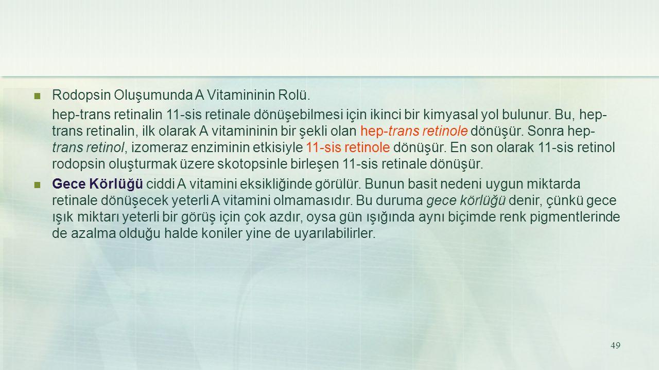 Rodopsin Oluşumunda A Vitamininin Rolü. hep-trans retinalin 11-sis retinale dönüşebilmesi için ikinci bir kimyasal yol bulunur. Bu, hep- trans retinal