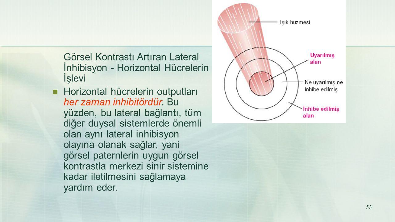 Görsel Kontrastı Artıran Lateral İnhibisyon - Horizontal Hücrelerin İşlevi Horizontal hücrelerin outputları her zaman inhibitördür. Bu yüzden, bu late