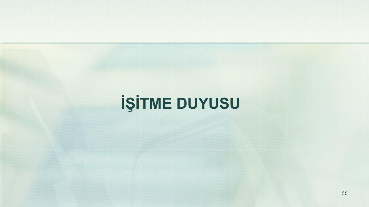 İŞİTME DUYUSU 56