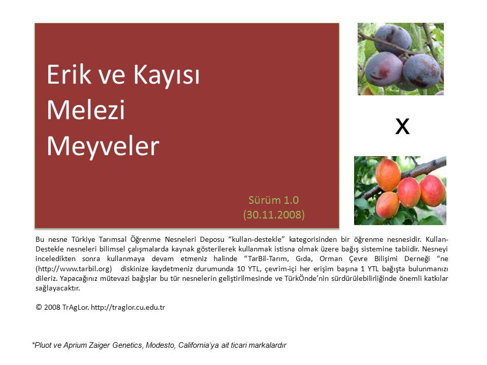 plumcot Plumcot %50 erik + %50 kayısı ( Prunus armeniaca x Prunus domestica ) melezi meyvelere plumcot denilmektedir.