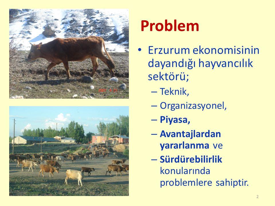 Problem Erzurum ekonomisinin dayandığı hayvancılık sektörü; – Teknik, – Organizasyonel, – Piyasa, – Avantajlardan yararlanma ve – Sürdürebilirlik konularında problemlere sahiptir.