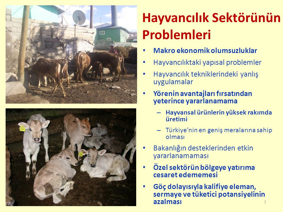 Hayvancılık Sektörünün Problemleri Makro ekonomik olumsuzluklar Hayvancılıktaki yapısal problemler Hayvancılık tekniklerindeki yanlış uygulamalar Yörenin avantajları fırsatından yeterince yararlanamama – Hayvansal ürünlerin yüksek rakımda üretimi – Türkiye'nin en geniş meralarına sahip olması Bakanlığın desteklerinden etkin yararlanamaması Özel sektörün bölgeye yatırıma cesaret edememesi Göç dolayısıyla kalifiye eleman, sermaye ve tüketici potansiyelinin azalması 7