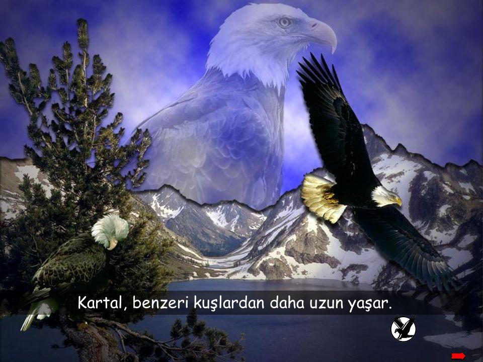Kartal, benzeri kuşlardan daha uzun yaşar.
