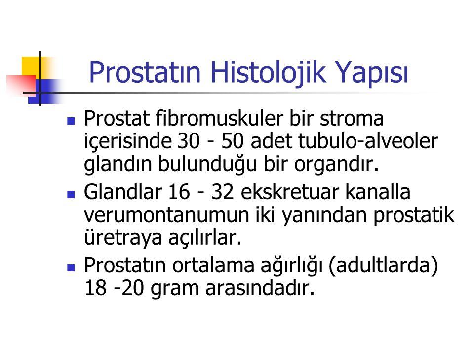 Prostatın Histolojik Yapısı Prostat fibromuskuler bir stroma içerisinde 30 - 50 adet tubulo-alveoler glandın bulunduğu bir organdır. Glandlar 16 - 32